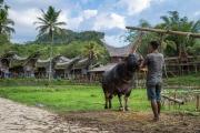 Indonesia_Sulawesi_Tona_Toraja_FAB5259-2