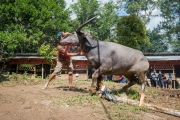 Indonesia_Sulawesi_Tona_Toraja_Funeral_FAB4099