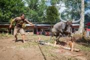 Indonesia_Sulawesi_Tona_Toraja_Funeral_FAB4102