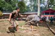 Indonesia_Sulawesi_Tona_Toraja_Funeral_FAB4104