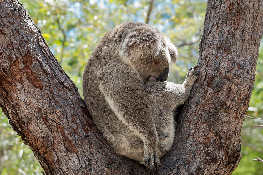 Australia_Cape_tribulation_FAB4653