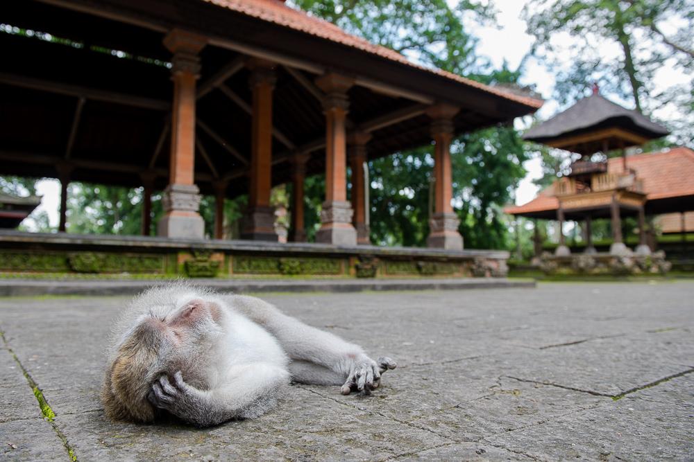 Indonesia_Bali__FAB6990