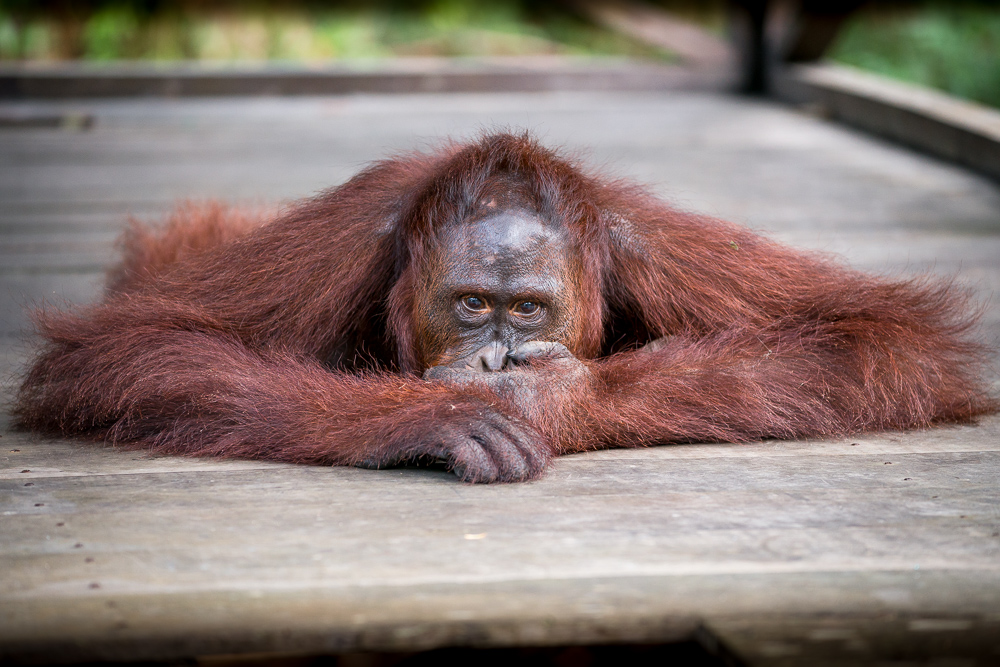 Indonesia_Borneo__FAB3101