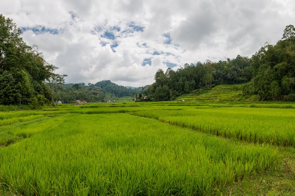 Indonesia_Sulawesi_Tona_Toraja_FAB5119