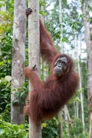Indonesia_Borneo__FAB3029