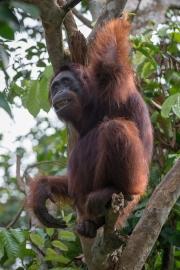 Indonesia_Borneo__FAB3076