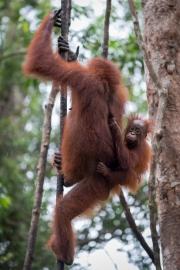 Indonesia_Borneo__FAB3606