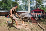 Indonesia_Sulawesi_Tona_Toraja_Funeral_FAB4105