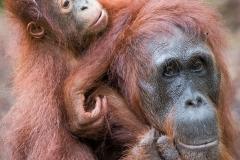 Indonesia_Borneo__FAB2837