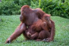 Indonesia_Borneo__FAB2862