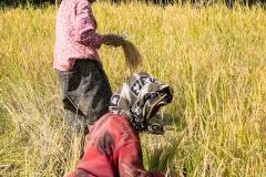 Indonesia_Sulawesi_Tona_Toraja_FAB5230