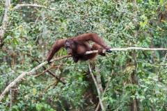 Indonesia_Borneo__FAB2963
