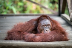 Indonesia_Borneo__FAB3114