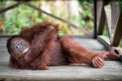 Indonesia_Borneo__FAB3116