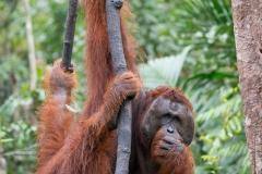 Indonesia_Borneo__FAB3628