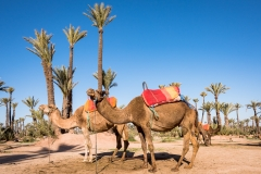 Morocco_FAB_1196