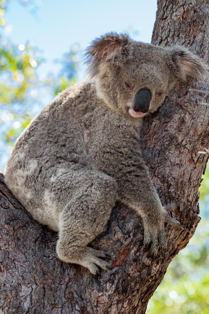 Australia_Cape tribulation_FAB4559