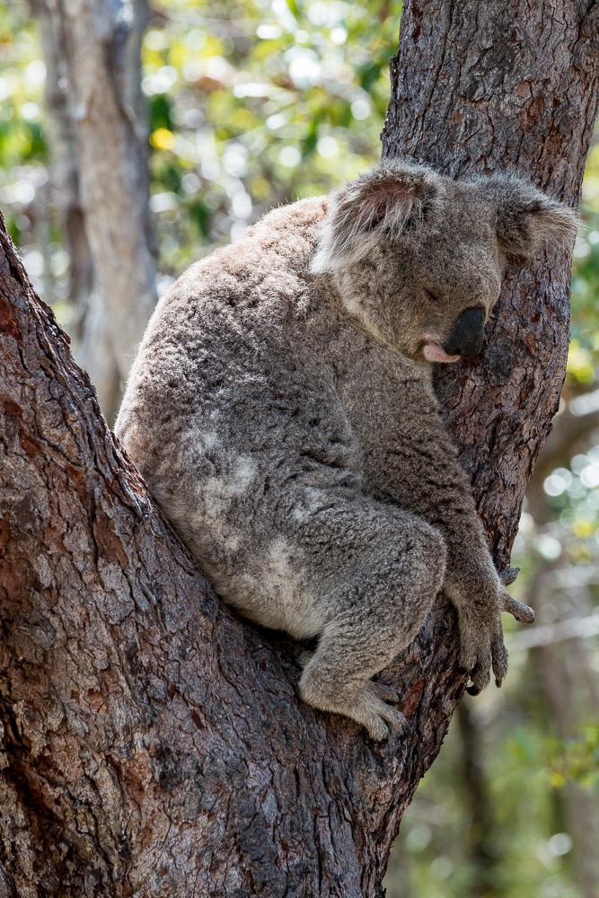 Australia_Cape tribulation_FAB4542