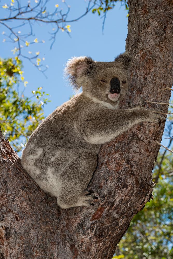 Australia_Cape tribulation_FAB4582