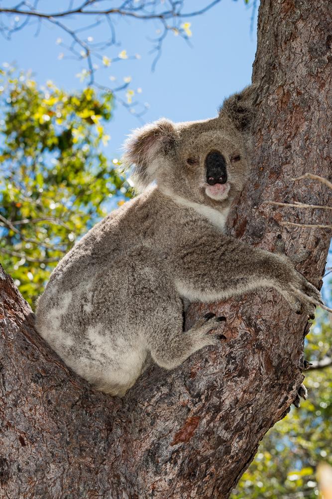 Australia_Cape tribulation_FAB4584