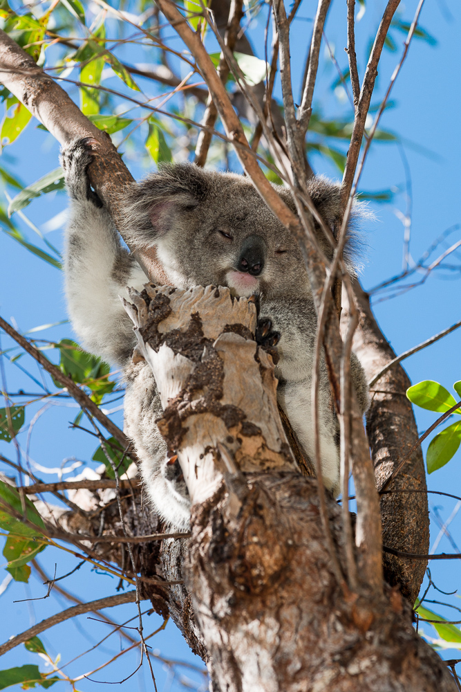Australia_Cape tribulation_FAB4614