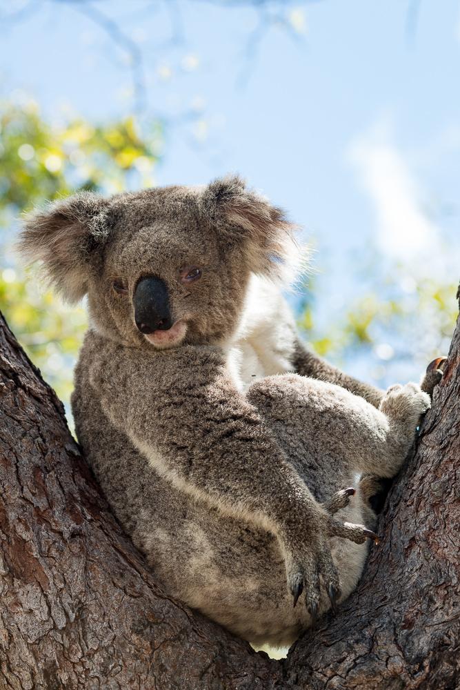 Australia_Cape tribulation_FAB4636
