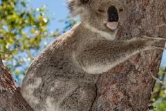 Australia_Cape tribulation_FAB4581