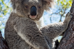 Australia_Cape tribulation_FAB4628