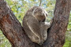 Australia_Cape tribulation_FAB4653